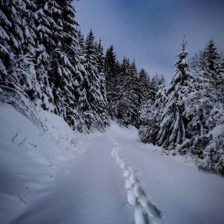 Schobsetal Schneeschuhwanderung
