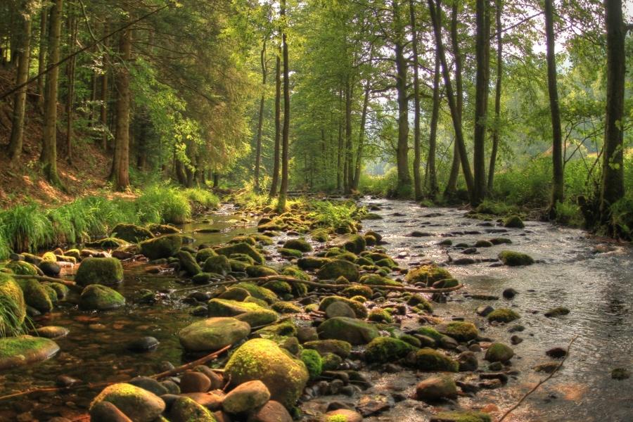 Von Dobel ins Tal der Lehmänner - Fernsicht und Bachidylle