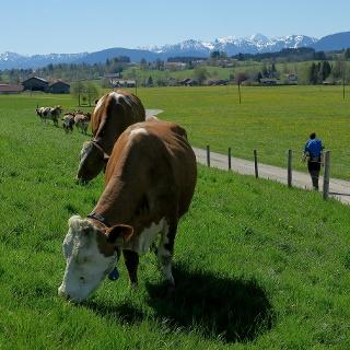 König-Ludwig-Weg: Die hohen Berge bleiben auf Distanz.