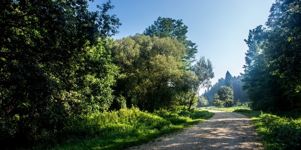 Erdős dózerút a Himfai-tó környékén