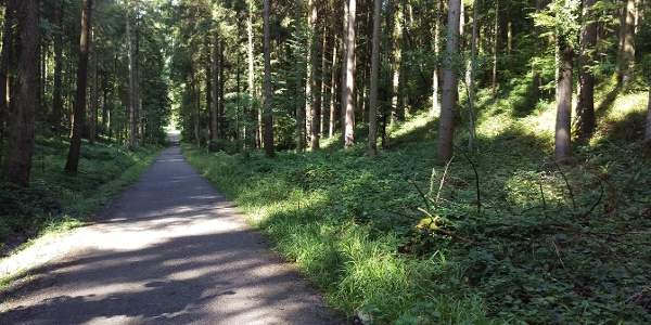 Gütschwald