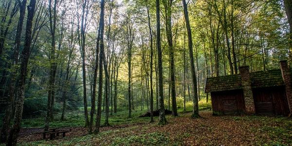 Zalai erdőben, Lasztonya közelében