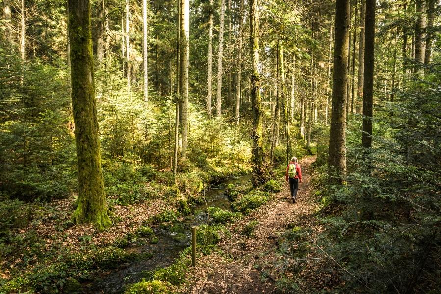Genießerpfad (Premiumweg) - Wasser-Wald- und Wiesenpfad Calw - Bad Teinach-Zavelstein