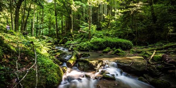 Der Bach verläuft über moosbedeckte Bäume und Steine