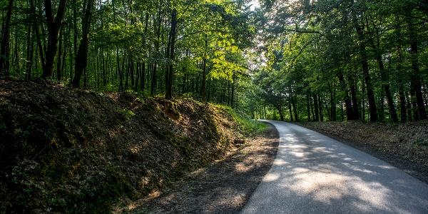 Erdészeti út Zselicben