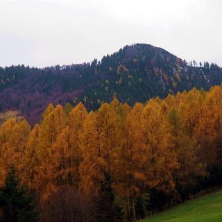 Mittagstein 1260m von Steinbach 547m