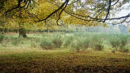 Geisterbusch Nähe Busenberg