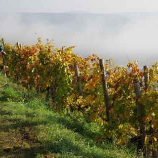Ahrtal im Nebel, Wein in der Sonne