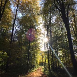Dielheimer Wald