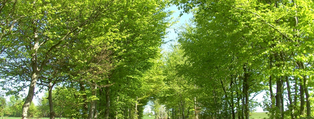 Monschauer Heckenlandschaft