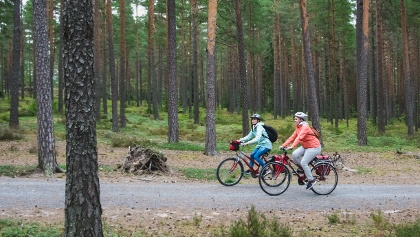 Listen to the sounds of silent forests while cycling