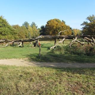 Baumstumpf in der Heide
