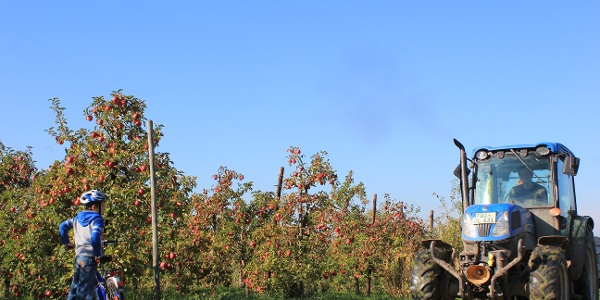 Obstplantage bei Leisnig