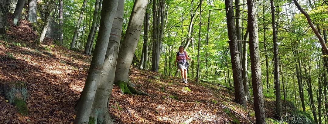 Waldweg nahe des Franzosenlochs