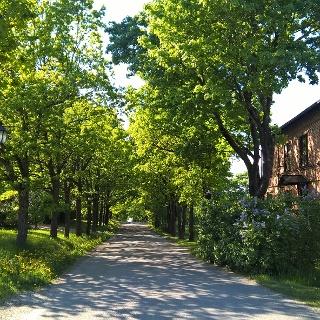 Mainroad in Mathildedal Ironworks village