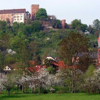 Die Gamburg im Frühling