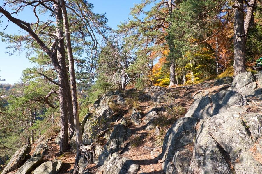 Albsteig Schwarzwald: Tiefenhäusern - Häusern