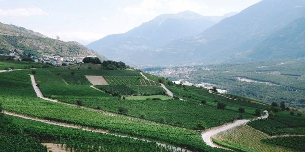 Vineyards between Varen and Leuk