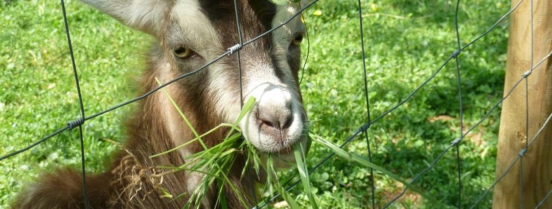 """Themenweg """"Rund ums liebe Vieh"""""""