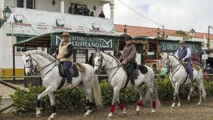 A group of riders presenting their pure bred horses at the public annual horse show for pure bred Lusitano horse