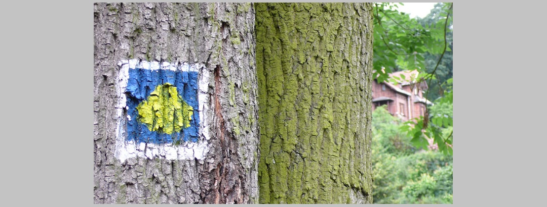 Wegmarkierung des Jakobswegs auf einem Baumstamm