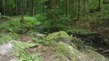 J4 - Wanderung zur Pfaffenmühle