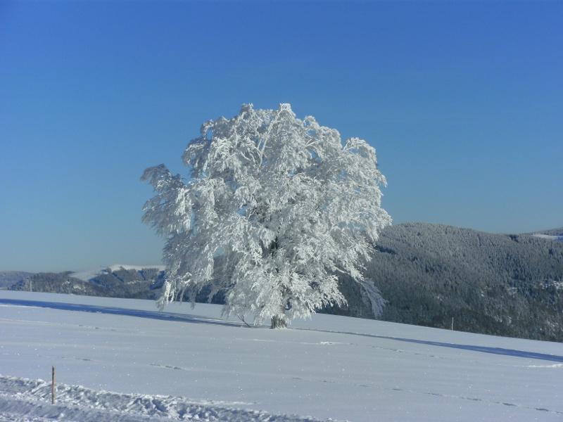 Kleiner Rundweg um den winterlichen Schauinslandgipfel