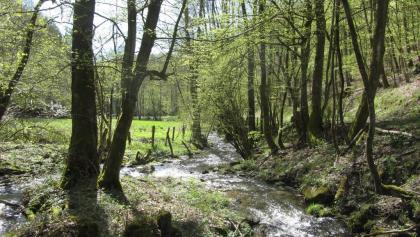 Tiefenbach zwischen Kesternich und Dedenborn