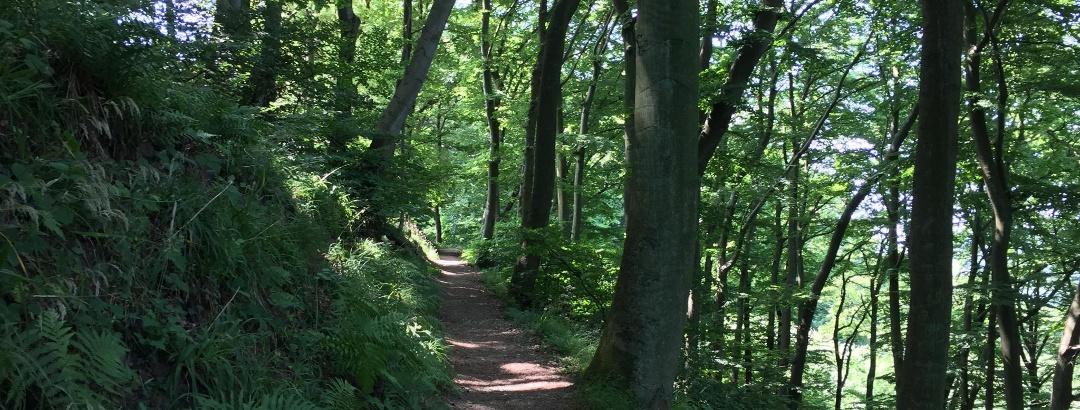 Trailabfahrt ins Rhöndorfer Tal