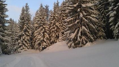 Geyerscher Wald