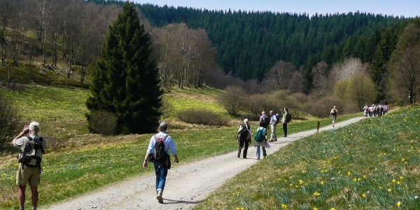 Narzissenblüte im Furthsbachtal / Perlenbachtal