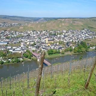 Blick auf Trittenheim