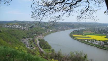 Blick auf den Rheinbogen (April 2012)