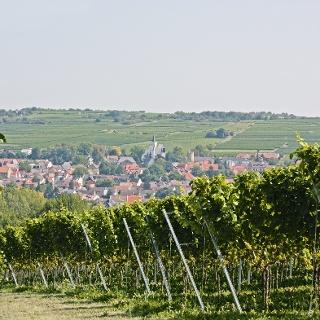 Bild vom Mainzer Berg