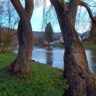 Am Ufer der Wied bei Waldbreitbach