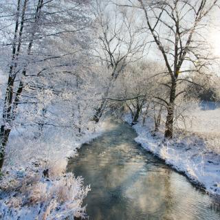 Die Lauter im Frost