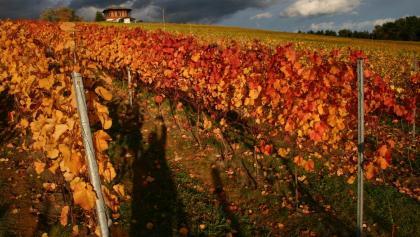 Weingarten vor dem Bernerhaus