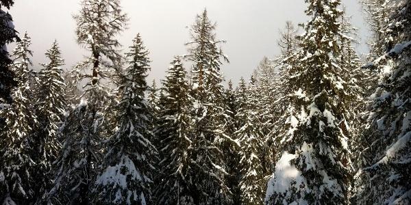 Verschneiter Bergwald