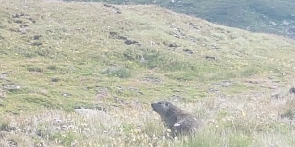 Keep an eye out for marmots!