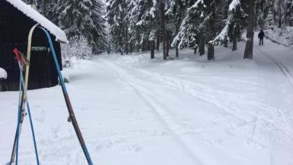 Schöner verschneiter Winterwald