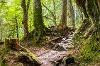 Wanderweg durch die Reichenbachklamm - @ Autor: Julian Knacker - © Quelle: Pfronten Tourismus