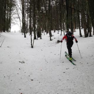 Aufstieg im Wald vom Ort Grünau aus