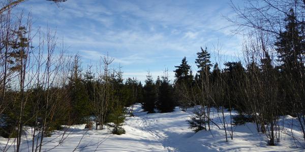 verschneiter Weg zum Gipfel