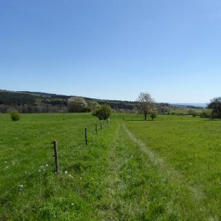 Wiesenlandschaft bei Losheim-Bergen