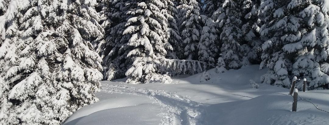Kurze Schneeschuhrunde auf der Stubalm_Almweide
