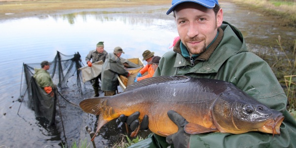 Abfischen bei der Teichwirtschaft Ringpfeil