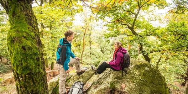Felsen und Kiefern am Eichelberg