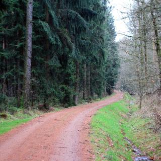 Steegenwald