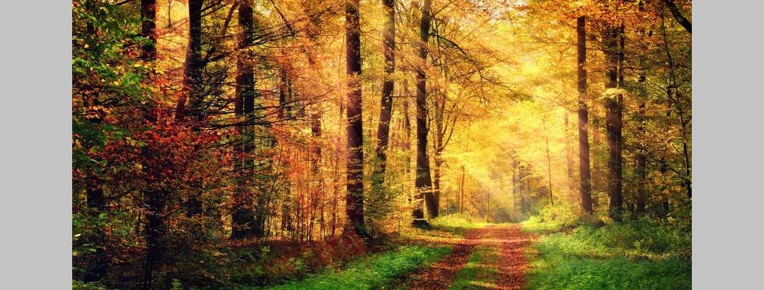 Herbstlicher Waldtrail in Hannover und Umgebung