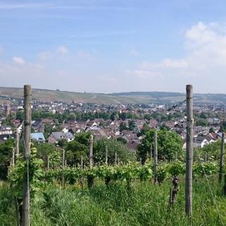 Blick über die Weinberge auf Bachem